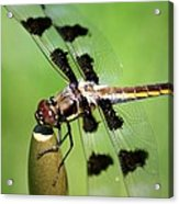Dragonfly In Black 2 Acrylic Print