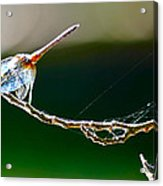 Dragonfly In The Wind Acrylic Print