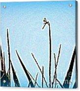 Dragonfly Magic Acrylic Print