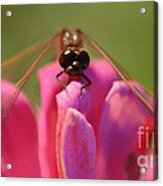 Dragonfly On Pink Flower Acrylic Print