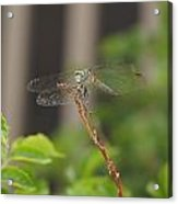 Dragonfly Smile Acrylic Print