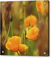 Dream Poppies Acrylic Print