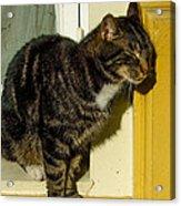 Dreaming Cat Acrylic Print