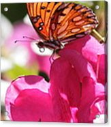 Dreaming Of Butterflies And Pink Flowers Acrylic Print