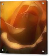 Dreams Of Rose Acrylic Print