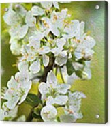 Dreamy Blossom. Acrylic Print