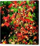 Dreamy Fall Leaves Acrylic Print