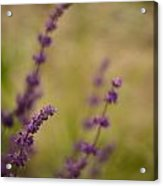 Dreamy Purple Acrylic Print