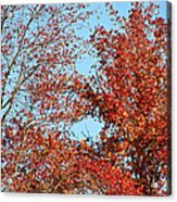 Dressed For Autumn Acrylic Print