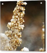 Dried Flower And Crystals Acrylic Print