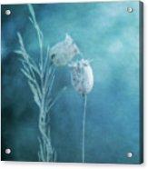 Dried Nigella Damascena As Dreamlike Characters Acrylic Print