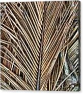 Dried Palm Fronds Acrylic Print