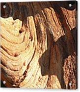 Driftwood 1 Acrylic Print