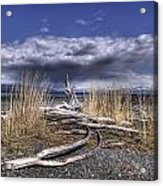 Driftwood By The Sea Acrylic Print
