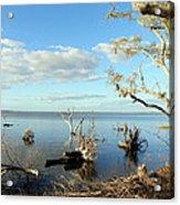 Driftwood Landscape 1 Acrylic Print