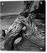 Driftwood On Beach Acrylic Print by Steven Ainsworth