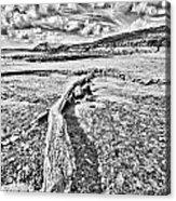 Driftwood Sketch Acrylic Print
