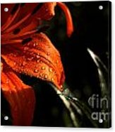 Droplets On Flower Acrylic Print