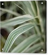 Drops Of Grass Symmetry Acrylic Print
