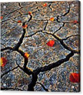 Dry Autumn Acrylic Print by Mike Norton