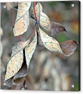 Dry Leaves Acrylic Print