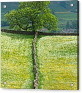 Dry Stone Wall And Lone Tree Acrylic Print