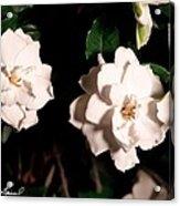 Dual Gardenias Acrylic Print