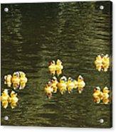 Duck Derby Ducks Acrylic Print