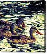 Duck Duck Duck  Acrylic Print