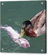 Duck Fishing Acrylic Print
