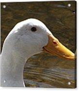 Duck Headshot Acrylic Print
