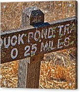 Duck Pond Trail Acrylic Print