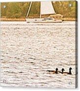 Duck Sailing Acrylic Print