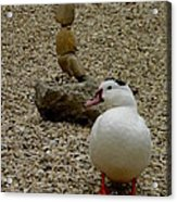 Duck With Rock Sculpture Acrylic Print