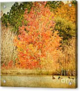 Ducks In An Autumn Pond Acrylic Print