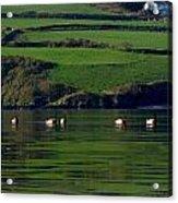Ducks In Dingle Harbour Acrylic Print