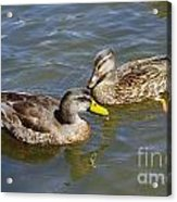 Ducks In The Sun Acrylic Print