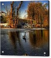 Ducks On Ice Acrylic Print