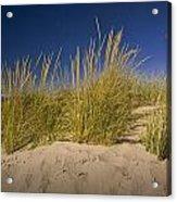 Dune And Beach Grass On Lake Michigan No.969 Acrylic Print