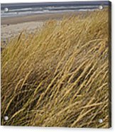 Dune Grass On The Oregon Coast Acrylic Print