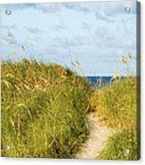 Dune Trail Acrylic Print
