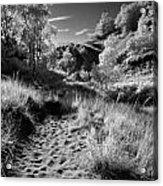 Dunes Path Acrylic Print
