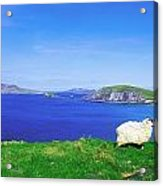 Dunmore Head, Blasket Islands, Dingle Acrylic Print