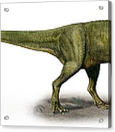 Duriavenator Hesperis, A Prehistoric Acrylic Print