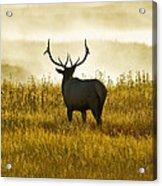 Dusky Elk Acrylic Print