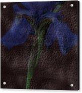 Dusty Iris Acrylic Print