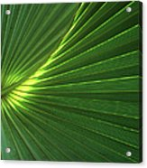Dwarf Palmetto Leaves Acrylic Print