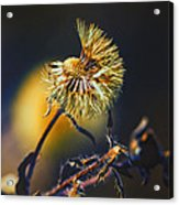 Dying Nature Glow Acrylic Print by Bill Tiepelman