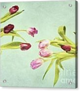Eager For Spring Acrylic Print