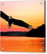 Eagle At Break Of Dawn Acrylic Print